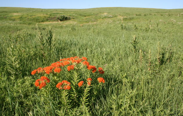 Tallgrass Prairie Management