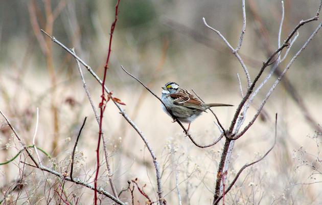 Great Backyard Bird Count - Saturday