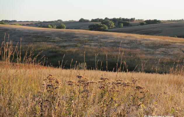 Prairie Corridor on Haines Branch