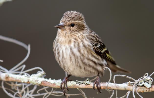 Bird Sightings