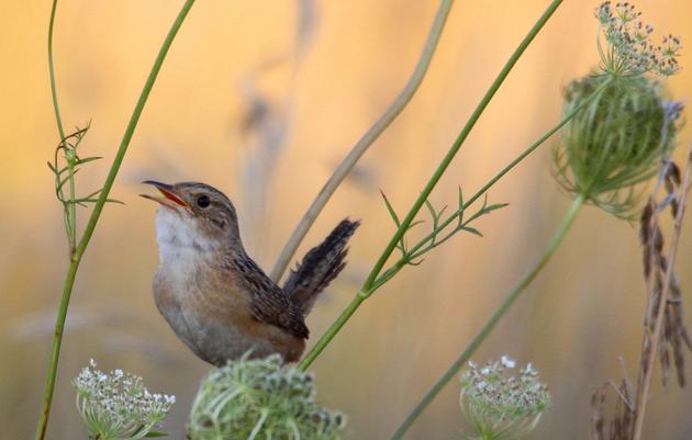 Prairies for Grassland Birds
