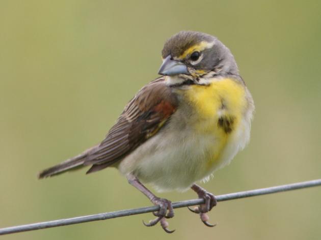 Spring Creek Prairie Audubon Center celebrates bird month on Super Bird Saturday!
