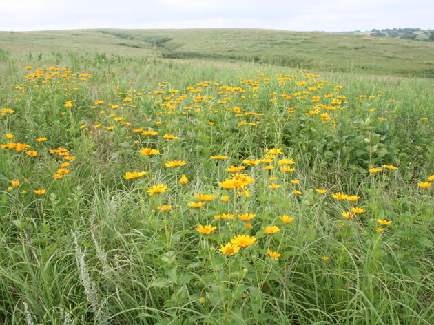 Sanctuary Receives Nebraska Environmental Trust Grant