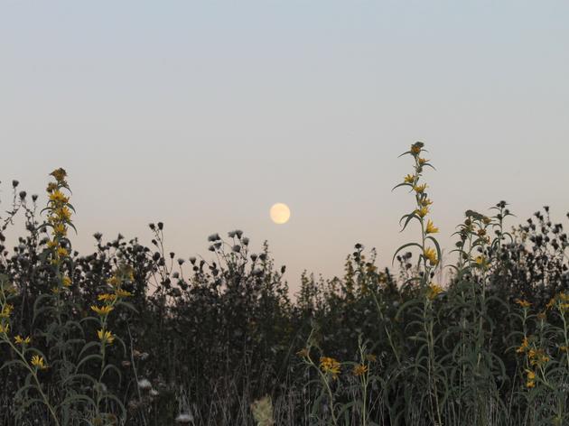 Frolic with Fireflies at Nightfall