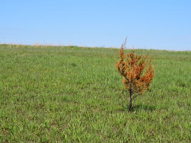 Nebraska Environmental Trust Awards Grant to Denton, Neb., Sanctuary