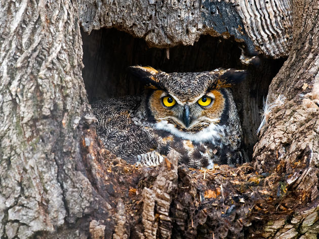 "Have a ""Hoot"" at Spring Creek Prairie's Owl Outing"