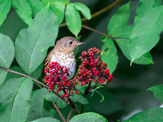 Audubon Celebrates Native Plants through New Facebook Series