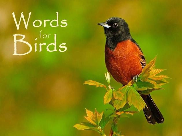 Words for Birds: How to Write for the 3 Billion Lost